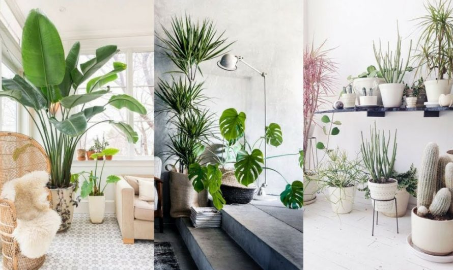 Indoor plants in living room