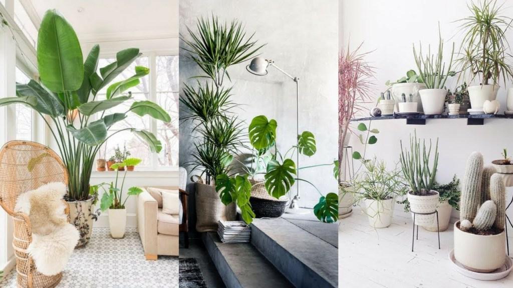 Indoor plants in living room 3ef52776